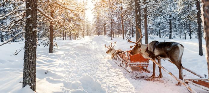 Besneeuwde bossen met rendieren en een slee