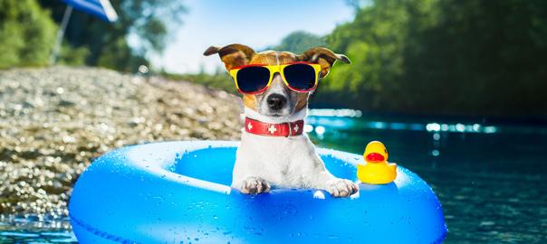 Hond met zonnebril en badeendje in zwembadje