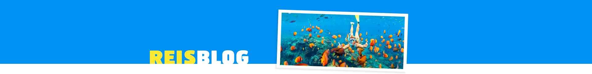 Snorkelen met vissen onderwater in Egypte